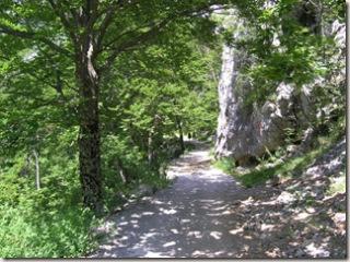 Beech Forest - Paklenica